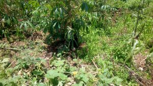 The Water Project:  Cassava And Pumpkin