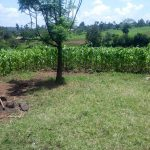 The Water Project: Musango Community A -  Maize