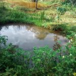The Water Project: Shilakaya Community, Shanamwevo Spring -  Fish Pond By Spring