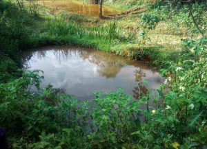 The Water Project:  Fish Pond By Spring