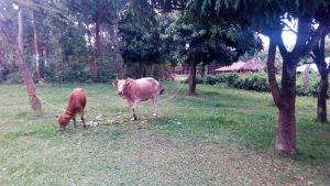 The Water Project:  Grazing Animals