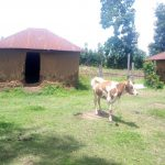The Water Project: Musango Community, Ham Mwenje Spring -  Household