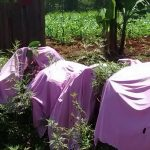 The Water Project: Bumavi Community, Esther Spring -  Clothes Drying On Bushes