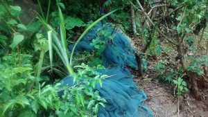 The Water Project:  Mosquito Nets Not Being Used Properly