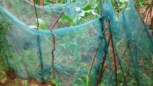 The Water Project:  Mosquito Nets Being Used As Fencing