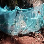 The Water Project: Ivulugulu Community -  Mosquito Net Being Used As Fencing