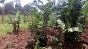 The Water Project:  A Nearby Farm