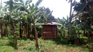 The Water Project:  Latrine Through Banana Farm
