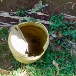 The Water Project: Emwanya Community, Josam Kutsuru Spring -  Container Put Out For Rain