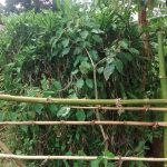 The Water Project: Elukani Community -  Bushes Planted As A Bathing Shelter