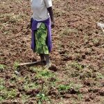 The Water Project: Ulagai Community -  Working On The Farm