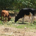 The Water Project: Elukho Community A -  Livestock