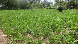 The Water Project:  Ground Nut Farm