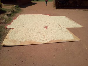 The Water Project:  Maize Drying At School