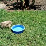 The Water Project: Masera Community, Ernest Mumbo Spring -  Water