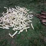 The Water Project: Muyundi Community -  Maize Used For Fires
