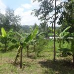 The Water Project: Masera Community, Ernest Mumbo Spring -  Bananas