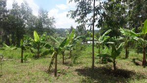 The Water Project:  Bananas