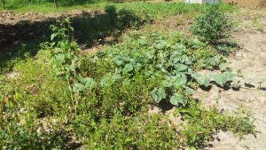 The Water Project:  Nearby Vegetable Garden