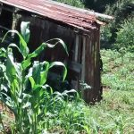 The Water Project: Jivovoli Community -  Latrine