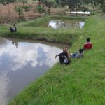 The Water Project: Ingavira Community, Laban Mwanzo Spring -  Fish Farm
