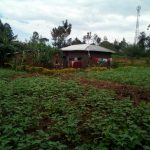 The Water Project: Muraka Community A -  Farm
