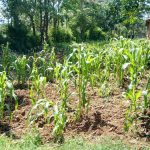 The Water Project: Muyere Primary School -  Schools Farm
