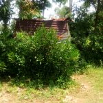 The Water Project: Mungaha B Community, Maria Spring -  Latrine Amid Brush