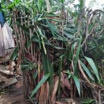 The Water Project: Emachembe Community A -  Improvised Latrine