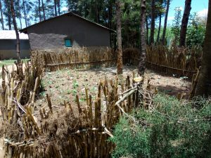 The Water Project:  A Kitchen Garden Fenced With Maize Stalks