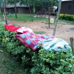 The Water Project: Chegulo Community, Werabunuka Spring -  Cloths Hang On A Flower Hedge