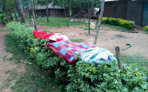 The Water Project:  Cloths Hang On A Flower Hedge