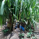 The Water Project: Chegulo Community B -  Dirt Dumped At A Sugarcane Plant