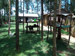 The Water Project:  Homestead With Rooster Roaming And Dogs Resting