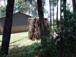 The Water Project:  Latrine Made Of Banana Leaves