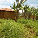 The Water Project: Emaka Community, Ateka Spring -  Banana And Groundnut Plantation At A Households Backyard