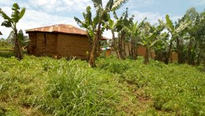 The Water Project:  Banana And Groundnut Plantation At A Households Backyard