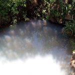 The Water Project: Lunyi Community, Fedha Mukhwana Spring -  Picture Of Water Source