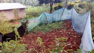 The Water Project:  Mosquito Nets Used For Wrong Purposes