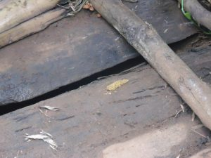 The Water Project:  Cases Of Open Defecation In Latrine Floors