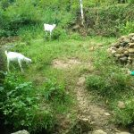 The Water Project: Shitoto Community -  Goats Grazing