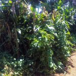 The Water Project: Masera Community, Murumba Spring -  A Bathroom Made From Bushes