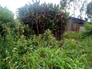 The Water Project:  A Bathroom Made From Growing Bushes