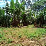 The Water Project: Elutali Community -  Banana Plantation
