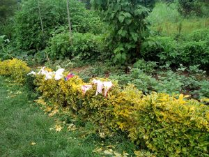The Water Project:  Clothes Hang On Flowers In The Compound