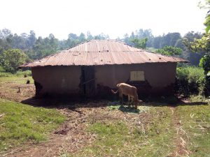 The Water Project:  Cow In Front Of Home