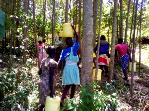 The Water Project:  Fetching Water For Construction