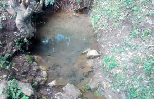 The Water Project:  Mwangu Spring Water Source