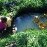 The Water Project: Mukhangu Community, Okumu Spring -  Fetching Water At Okumu Spring