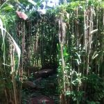 The Water Project: Musiachi Community -  A Bush Used As A Bathroom